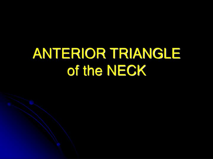 anterior triangle of the neck n.
