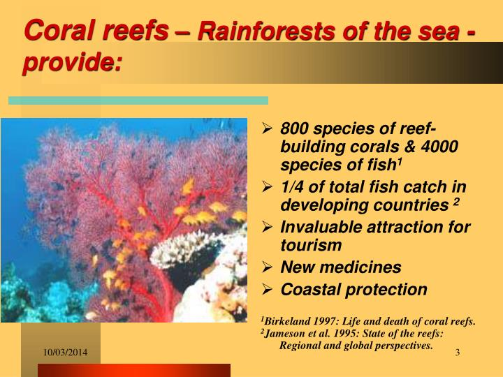 Coral reefs rainforests of the sea provide