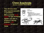 class arachnida spiders scorpions ticks mites