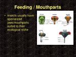feeding mouthparts