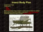 insect body plan