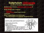 subphylum chilicerata arachnids horseshoe crabs sea spiders