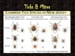 ticks mites
