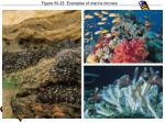 figure 50 23 examples of marine biomes