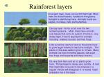 rainforest layers