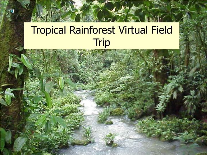 tropical rainforest virtual field trip n.