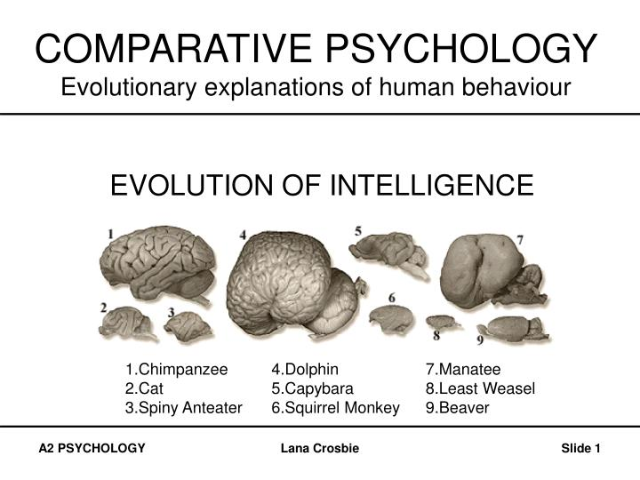 comparative psychology evolutionary explanations of human behaviour n.
