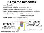 6 layered neocortex