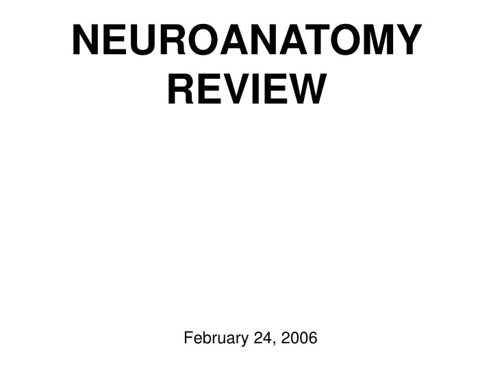 neuroanatomy review n.
