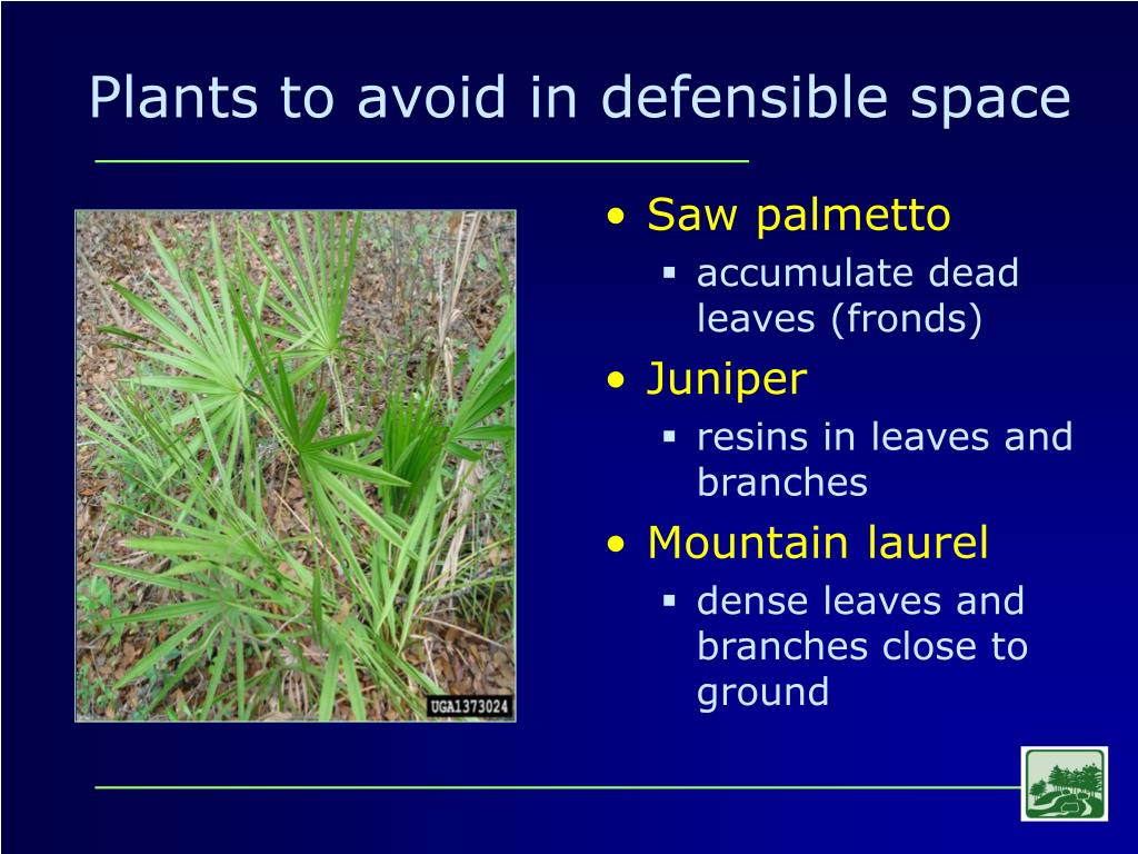 Plants to avoid in defensible space