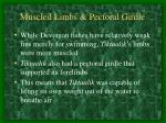 muscled limbs pectoral girdle