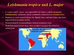 leishmania tropica and l major
