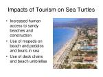 impacts of tourism on sea turtles