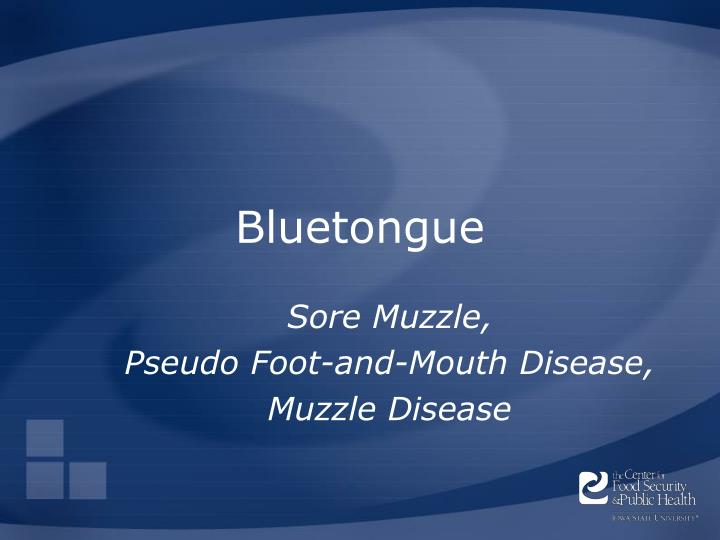 bluetongue n.