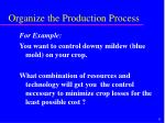 organize the production process6