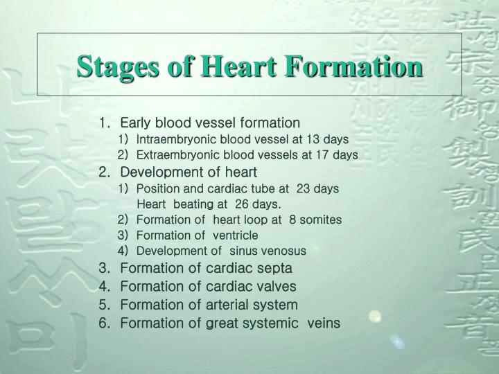 Stages of Heart Formation