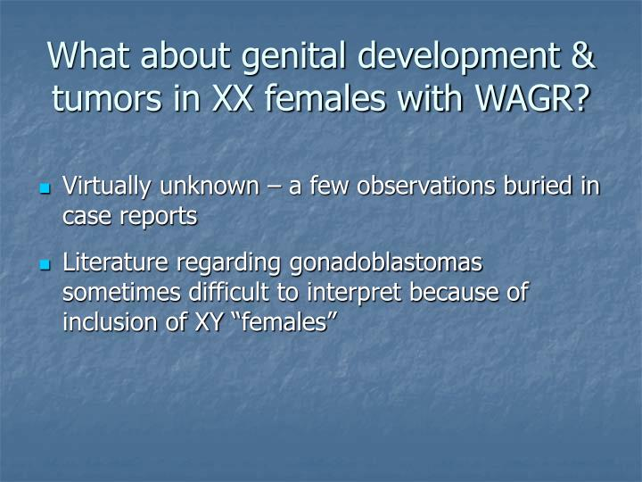 What about genital development & tumors in XX females with WAGR?