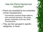 how are plants named and classified