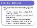 excretory processes1