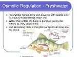 osmotic regulation freshwater1