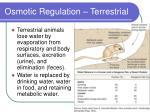 osmotic regulation terrestrial