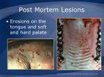 post mortem lesions