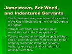 jamestown sot weed and indentured servants