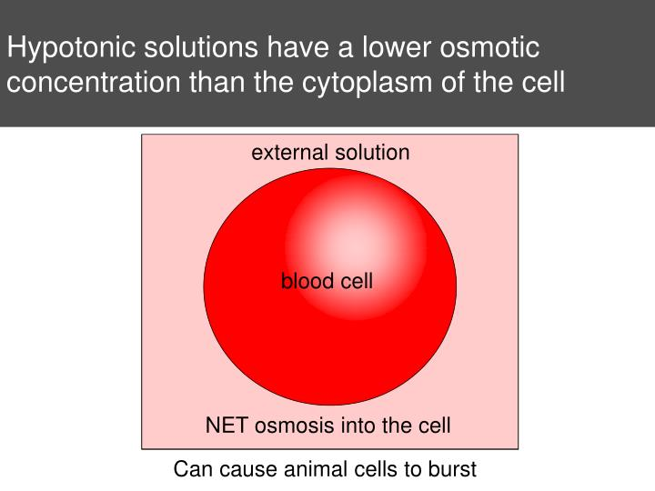 Hypotonic solutions have a lower osmotic concentration than the cytoplasm of the cell