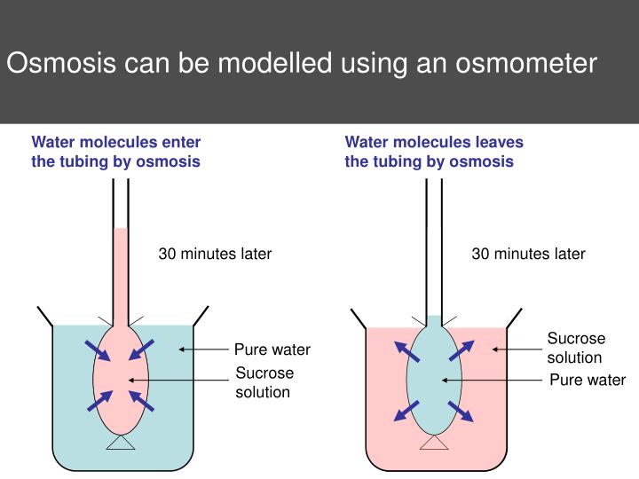 Osmosis can be modelled using an osmometer