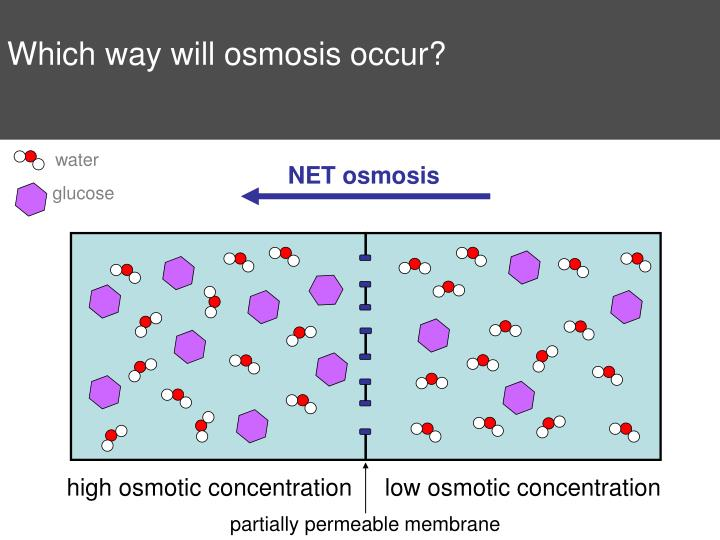 Which way will osmosis occur?