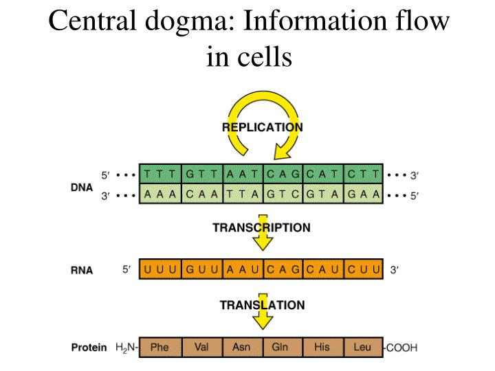 central dogma information flow in cells n.
