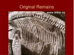 original remains11