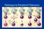 pathways to peripheral tolerance