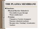the plasma membrane1