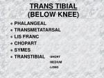 trans tibial below knee
