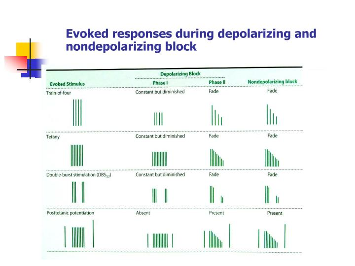 Evoked responses during depolarizing and nondepolarizing block