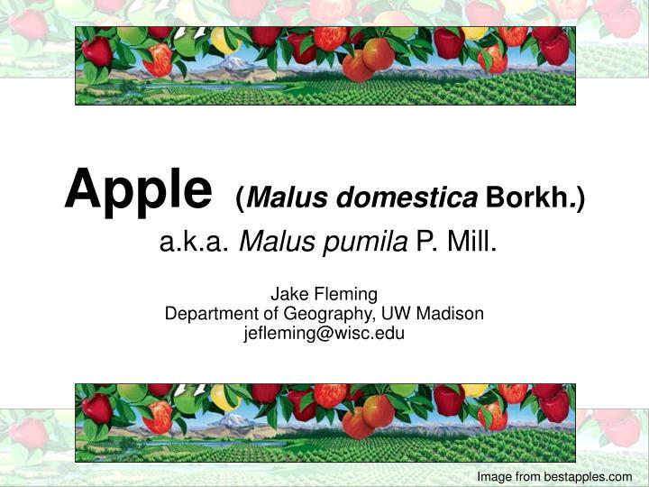 apple malus domestica borkh a k a malus pumila p mill n.