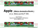 apple malus domestica borkh a k a malus pumila p mill
