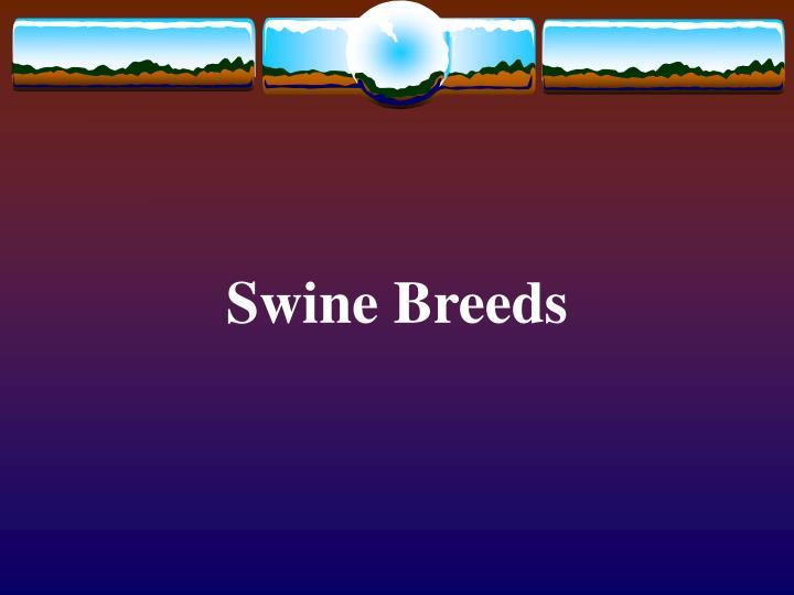 swine breeds n.