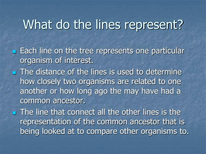 Celtic Symbols And Their Meanings Mythologian Net What Does A Tree