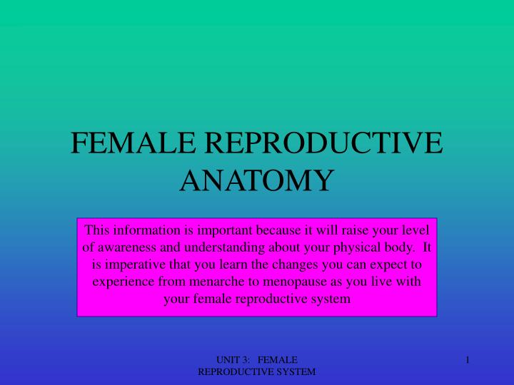female reproductive anatomy n.