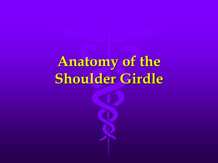 Anatomy of the shoulder girdle
