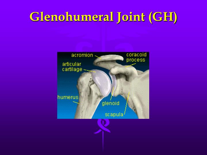 Glenohumeral Joint (GH)