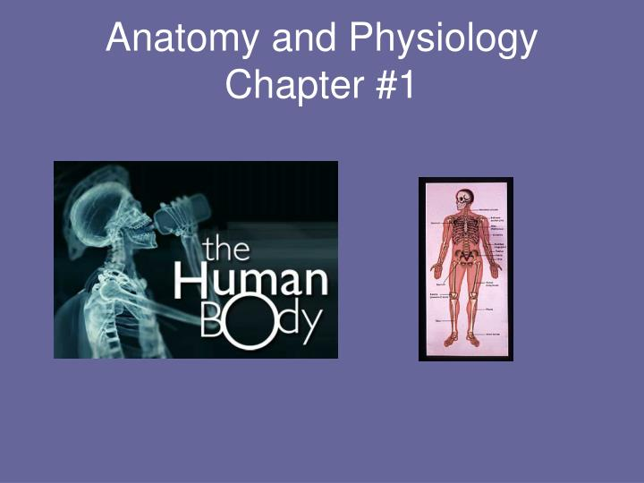 anatomy and physiology chapter 1 n.