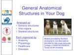 general anatomical structures in your dog