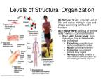 levels of structural organization1