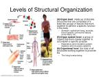 levels of structural organization2