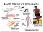 levels of structural organization3