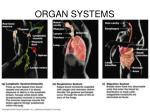 organ systems2