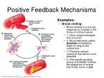 positive feedback mechanisms2